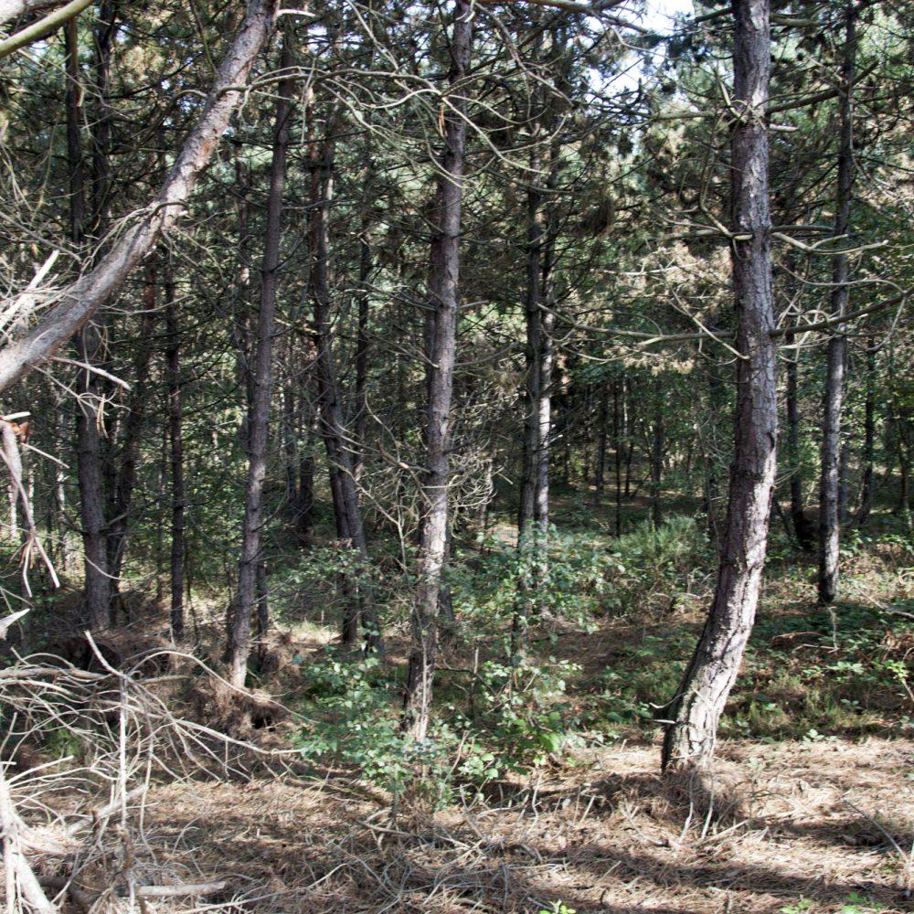 cité arbre-martot-eure-3