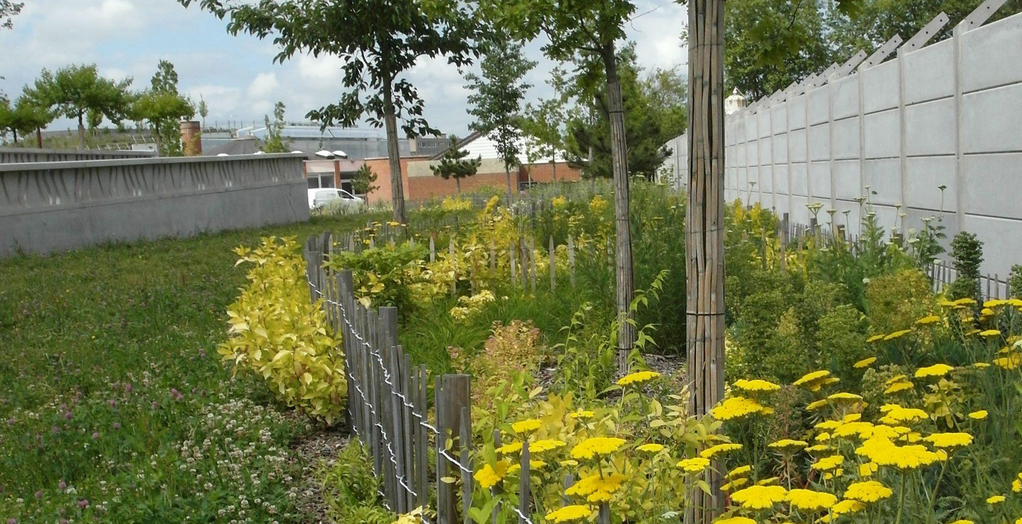 Achillea millefolium et Euphorbia characias étoffent les massifs jaunes