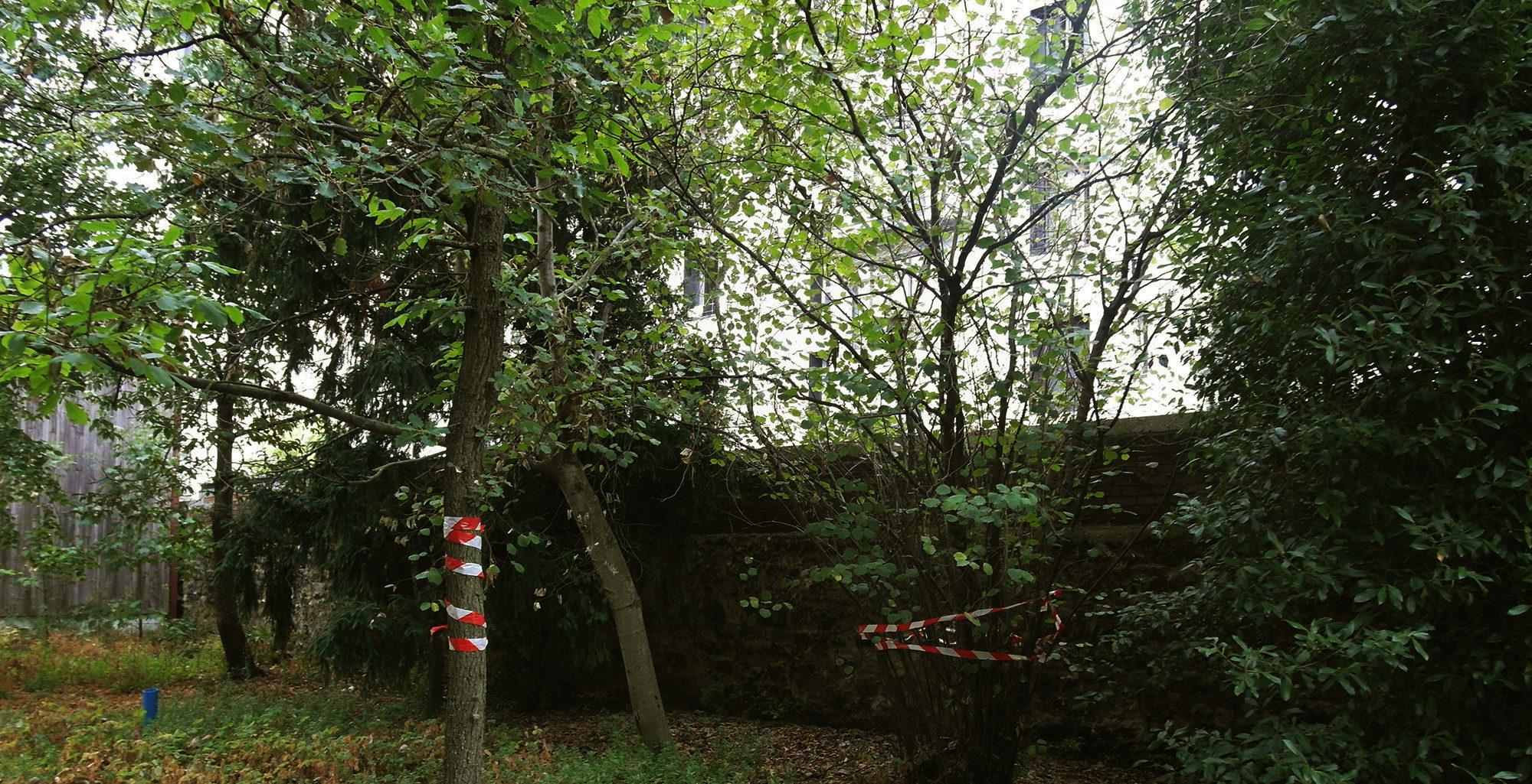 repérage des arbres conservés