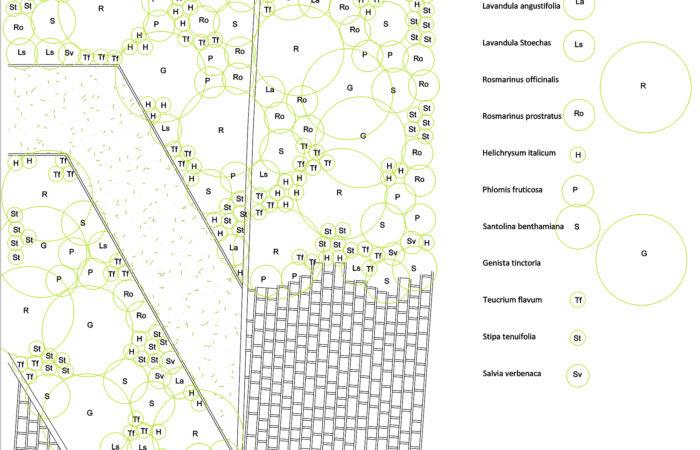 Plan de plantation détaillé, jardin sans arrosage
